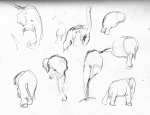 tarongazoo sketches1 LR
