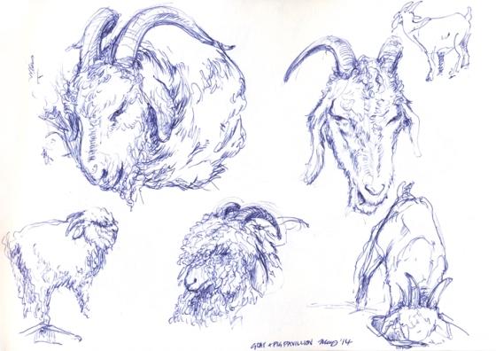 Prize winning goats